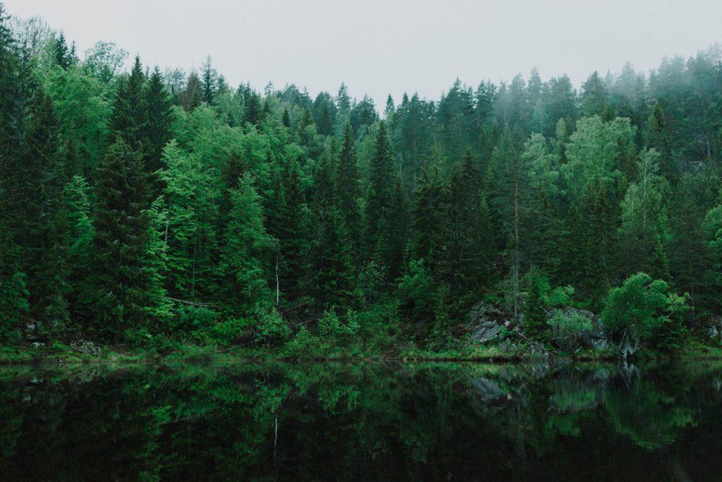 MPS Monitor y PrintReleaf: una colaboración que vale 31.880 árboles