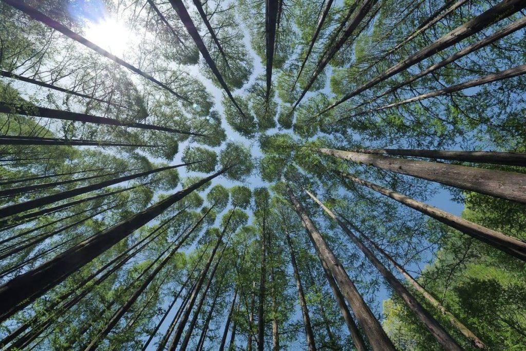 MPS Monitor y PrintReleaf juntos para la reforestación. Objetivo: un trillón de árboles